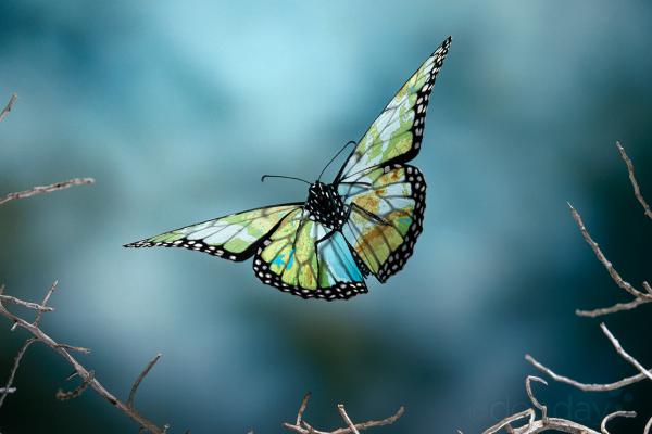 FoF_Butterfly