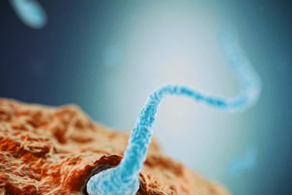 Befruktning (spermie)